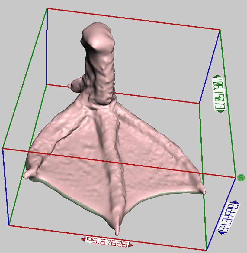 3d-printed-duck-prosthetic-designboom04